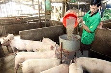 Cooperation to enhance animal feed supply chain management