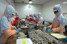 Ca Mau strives to earn 1.1 billion USD from aquatic export this year