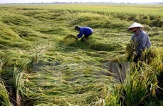 Measures sought to develop agriculture in northwestern region