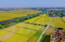 Workshop discusses Belgian support for Vietnam's agriculture
