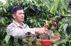 Vietnam joins management board of Asian Coffee Association