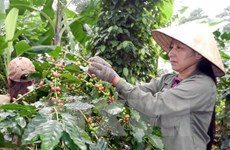 Vietnam to build upscale coffee brand