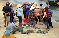 PM directs stockpiled seafood settlement in marine incident-hit provinces