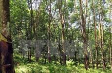 Vietnam records progress in forestry development