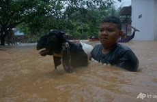 Cyclone death toll in Indonesia increases to 41