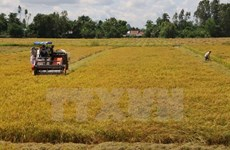 Initiatives to promote sustainable rice production honoured