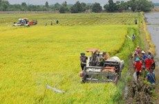 Dak Lak's food production reaches record high