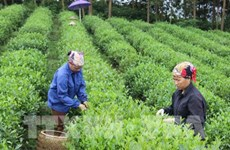 33 percent of farming cooperatives efficiently operate: Ministry