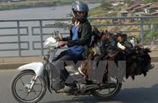 Bird flu detected in Cambodia