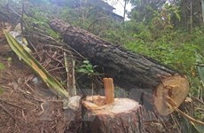 Dak Nong official held for violating forest regulations