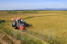 Vietnam's rice market fares well