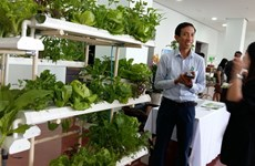 Da Nang calls for hi-tech farms