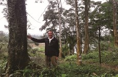 Man spends years to grow forest
