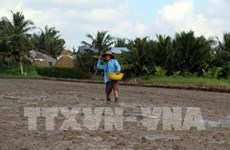 Southern Winter-Spring rice crop area down due to floods