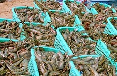 Tra Vinh: seafood exports expected to reach 352 mln USD in 2018