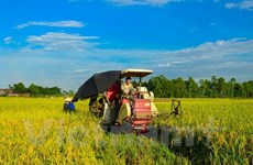 Ministry builds mechanism for land agglomeration, large-scale farming