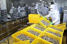 Vietnam's shrimp industry to become key economic sector