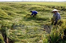 11 billion VND to help poor farmers enjoy Tet