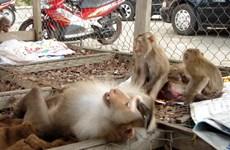 Wild animals handed over to Phong Nha – Ke Bang national park