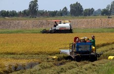 Mekong Delta seeks to turn agriculture challenges into opportunities
