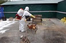 Vietnam records no new bird flu virus strains