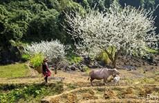 Ha Giang set to greet the world