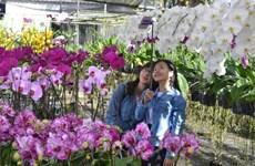 Delta's colourful Sa Dec flower village