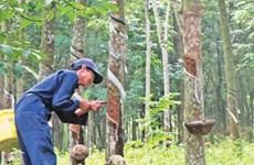 Vietnam Rubber Group eyes higher profits