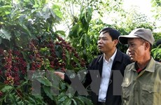 Market to bode well for coffee export