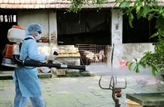 UK helps Vietnam forecast dengue fever epidemic