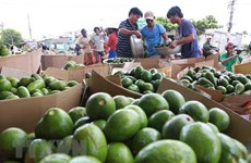 Vietnam seeks to accelerate agricultural restructuring