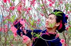 Peach blossom festival in Lang Son