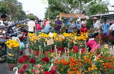 Ornamental plants - indispensable part of Tet