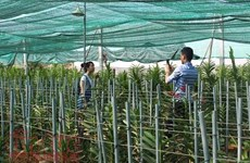HCM City's farm production shoots up