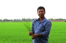 Dong Thap farmer profits from thinking big