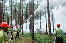 Dak Nong keeps wary eye on forests to prevent dry season fires