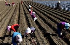 RoK's arable land edges down in 2017