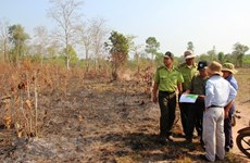 Binh Thuan faces high risk of forest fires