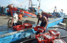 Coastal localities report bumper fishing catches
