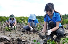 Quang Tri: FSC forest management certification for 22,000 hectares of forest