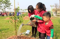 More Japanese cherry trees planted in Hanoi