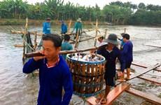 US to inspect Vietnam's pangasius control