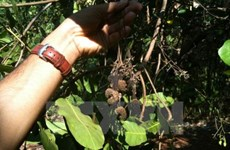 Long-term measures sought for sustainable cashew production