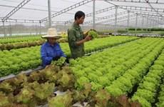 Project helps farmers in Son La increase incomes