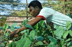 IFAD helps Myanmar improve farmers' income