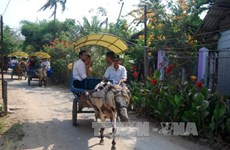 Ben Tre diversifies tourism products
