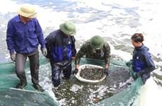 Aquatic catch, aquaculture output enjoy growth in first quarter