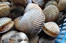 Binh Thuan bans mollusk, bivalve catching temporarily