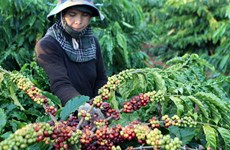 Central Highlands develops long-term industrial crops