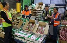 Vietnam's fruit, vegetable exports up 33.4 percent in Q1